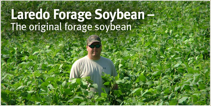 Laredo Forage Soybean - The original forage soybean