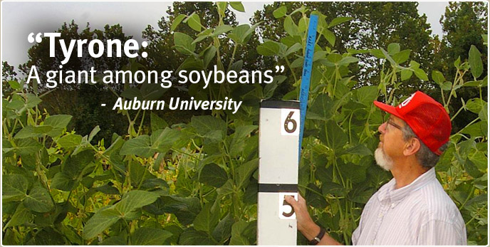 Tyrone: A giant among soybeans - Auburn University
